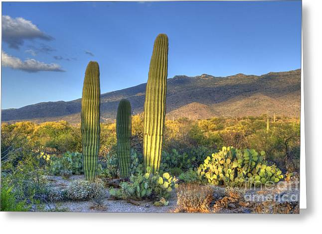 Sonoran Deset Greeting Cards - Cactus desert landscape Greeting Card by Juli Scalzi