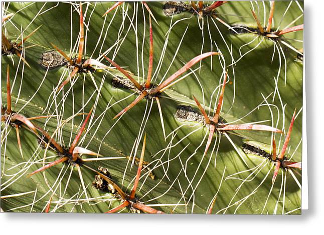 Cactus Diagonal Pattern Greeting Card by Jean Noren