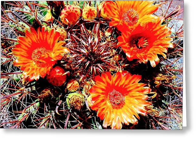 Recently Sold -  - Blooms Greeting Cards - Cactus Flower 2 Greeting Card by Randall Weidner