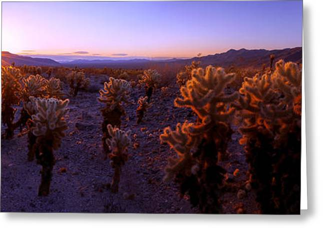 Prickly Greeting Cards - Prickly Greeting Card by Chad Dutson