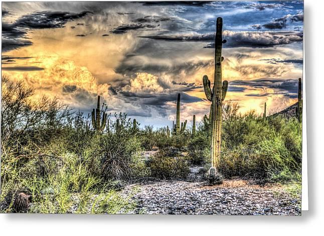 Cactus Galore Greeting Card by Jon Berghoff