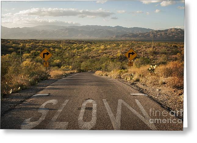 Scenic Drive Greeting Cards - Cactus Landscape Greeting Card by Juli Scalzi