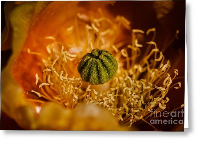 Mexican Flowers Greeting Cards - Cactus Pistil Greeting Card by Robert Bales