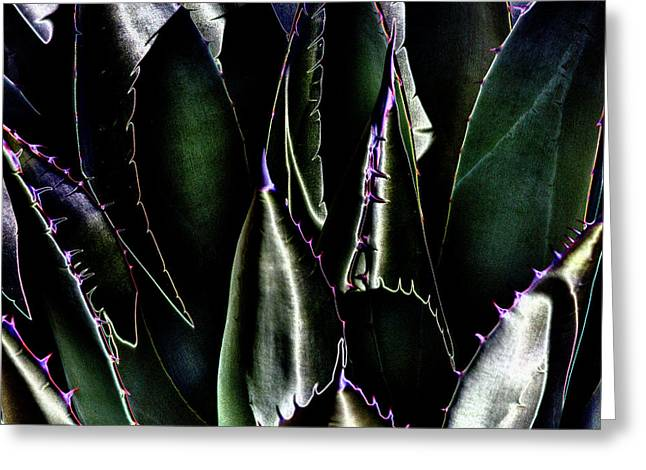 Taos Digital Greeting Cards - Cactus Sheen Greeting Card by David Patterson