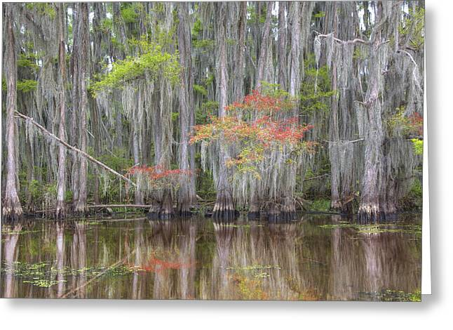 """caddo Lake"" Greeting Cards - Caddo Lake Colors 1 Greeting Card by Rob Greebon"