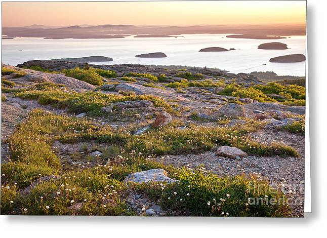 Wild And Scenic Greeting Cards - Cadillac Mountain View Greeting Card by Susan Cole Kelly