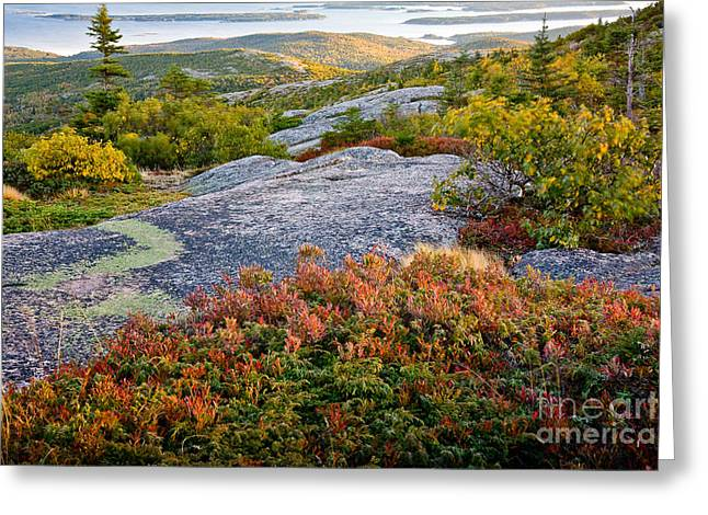 Wild And Scenic Greeting Cards - Cadillac Rock Garden Greeting Card by Susan Cole Kelly