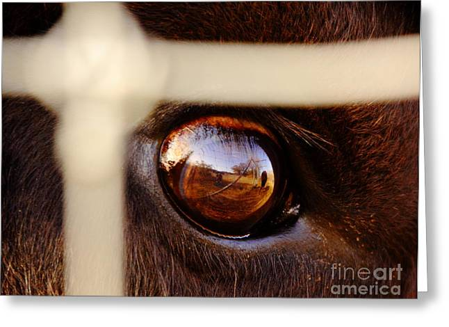 Bison Photos Greeting Cards - Caged Buffalo Reflects Greeting Card by Robert Frederick