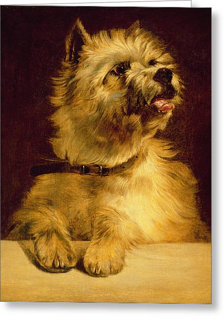 Ledge Greeting Cards - Cairn Terrier   Greeting Card by George Earl