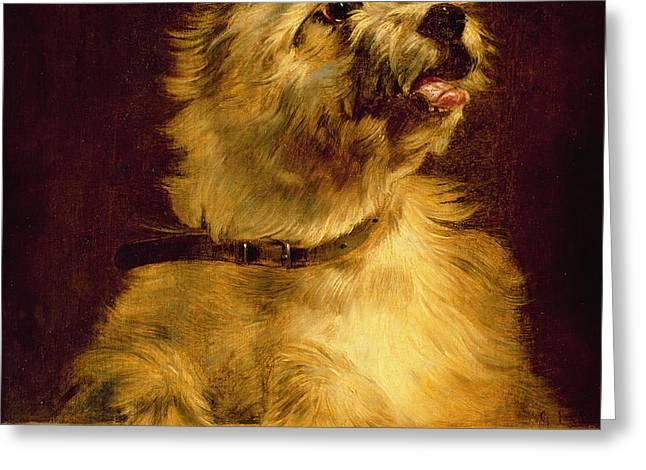 Cairn Terrier   Greeting Card by George Earl