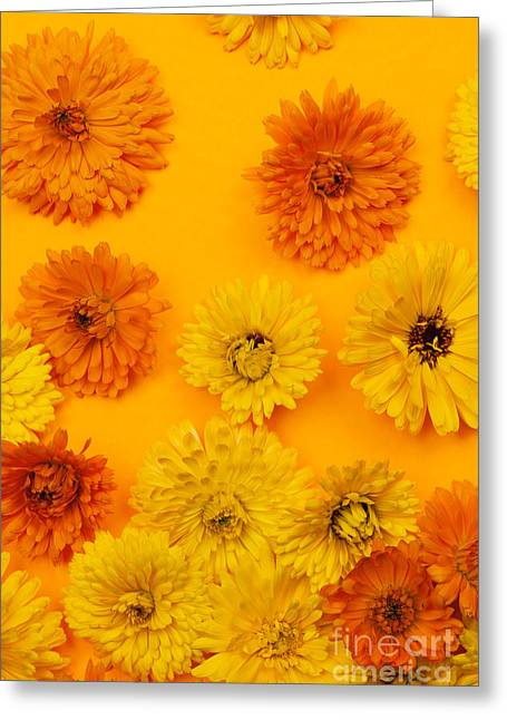 Marigold Greeting Cards - Calendula flowers on orange background Greeting Card by Elena Elisseeva