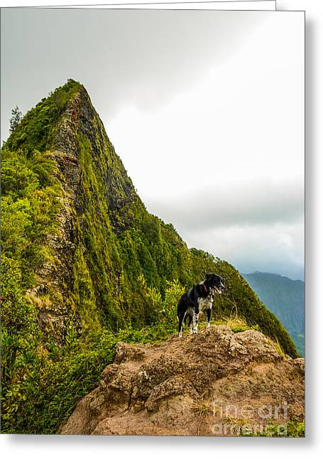 Doggies Greeting Cards - Cali on the Pali Greeting Card by Kristin Lam