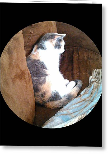Becky Greeting Cards - Calico Cat Profile Greeting Card by Becky Burt