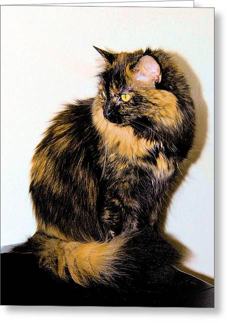 Photo Of Calico Cat Greeting Cards - Calico Cats Greeting Card by Cheryl Poland
