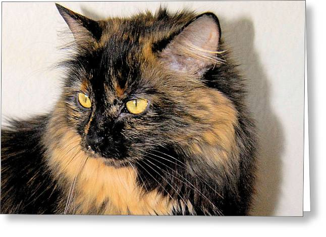 Photo Of Calico Cat Greeting Cards - Calico Head Study Greeting Card by Cheryl Poland