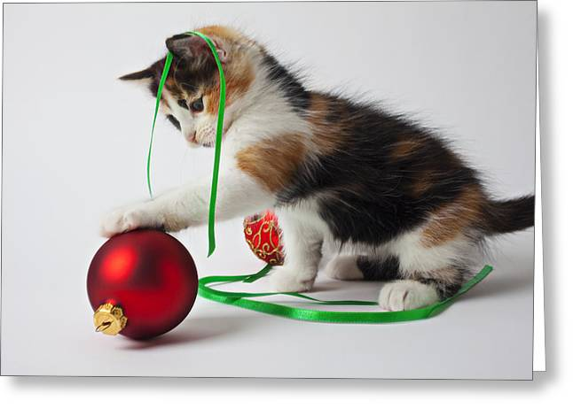 Cuddly Photographs Greeting Cards - Calico kitten and Christmas ornaments Greeting Card by Garry Gay