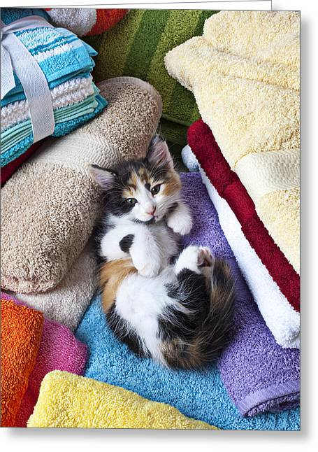 Innocent Greeting Cards - Calico kitten on towels Greeting Card by Garry Gay