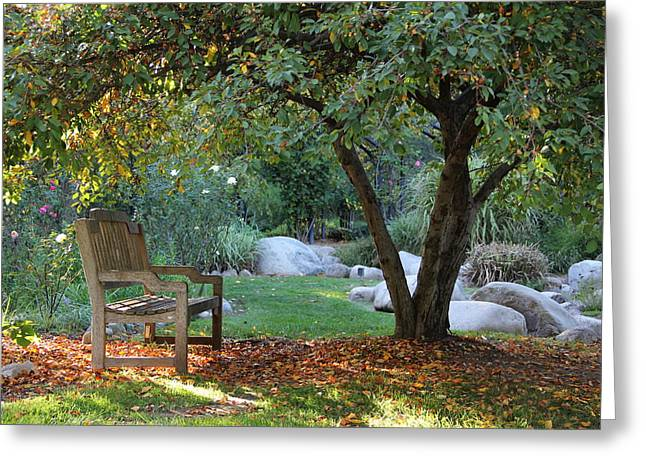 Dappled Light Greeting Cards - California Autumn Greeting Card by Jan Cipolla