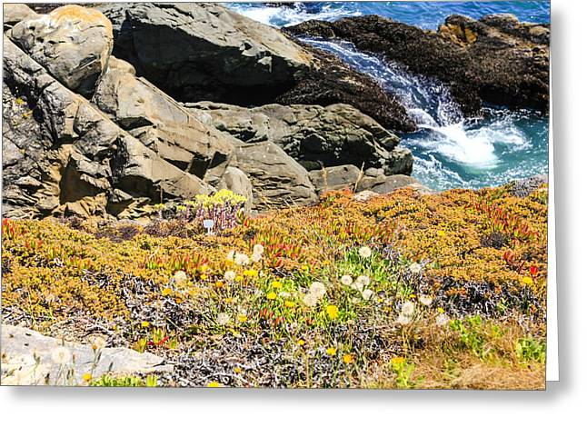 Outlook Greeting Cards - California Coastal Flora Greeting Card by Chris Smith