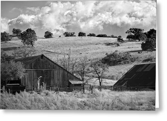 Ranch Greeting Cards - California Farmland - Black and White Greeting Card by Peter Tellone