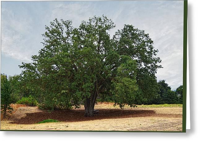Rugged Terrain Greeting Cards - California Oak Tree At Paramount Ranch Greeting Card by Glenn McCarthy Art and Photography
