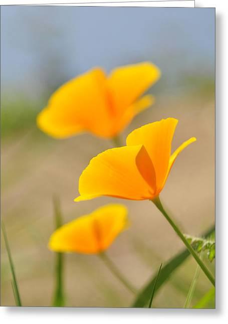 California Orange Poppy. Yellow Poppy Greeting Cards - California Poppies Greeting Card by Lara Ellis