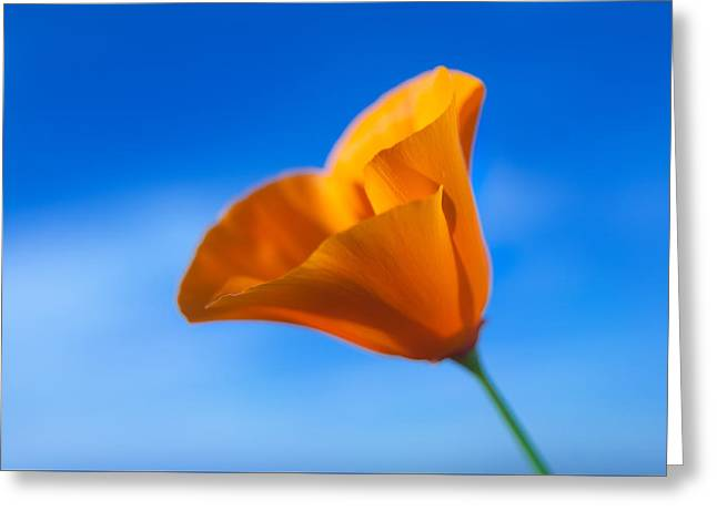 California Poppy Greeting Card by Ralph Vazquez