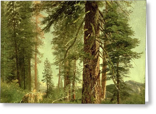California Redwoods Greeting Card by Albert Bierstadt