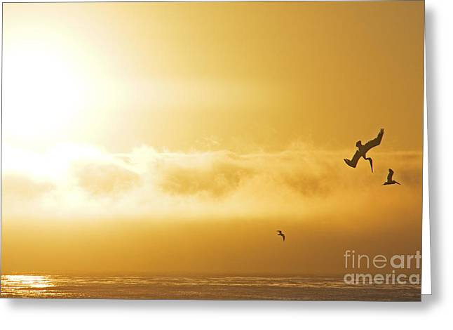 Big Sur Pyrography Greeting Cards - California Sunset Greeting Card by Stefano SmallBoy Tomassetti - Photodreamer