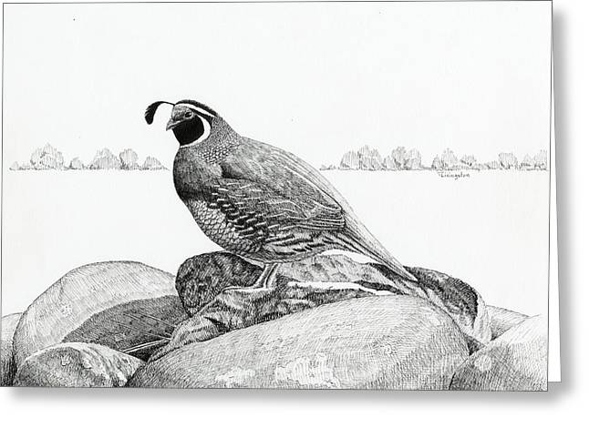 Pen And Ink Drawing Greeting Cards - California Valley Quail Greeting Card by Timothy Livingston