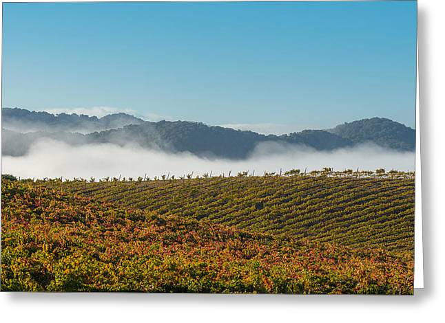 Fog Mist Greeting Cards - California Vineyard Greeting Card by Joseph Smith