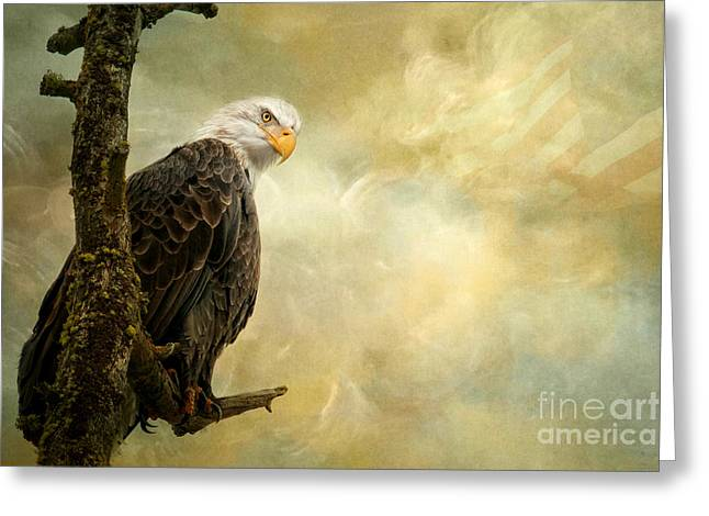 Call Of Honor Greeting Card by Beve Brown-Clark Photography