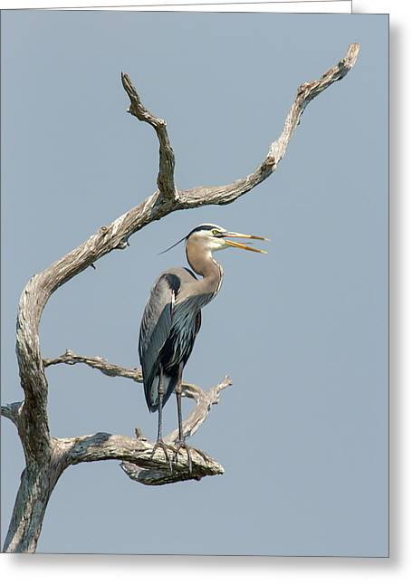 Wildlife Refuge. Greeting Cards - Call of the Wetlands Greeting Card by Dawn Currie