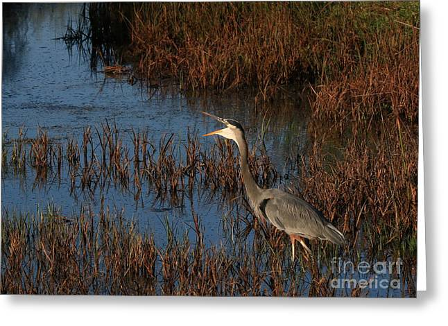Hunting Bird Greeting Cards - Call Of The Wild Greeting Card by Craig Corwin