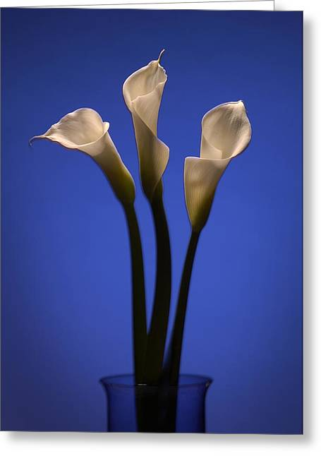 Calla Lily Greeting Cards - Calla Lilies Greeting Card by Steve Williams