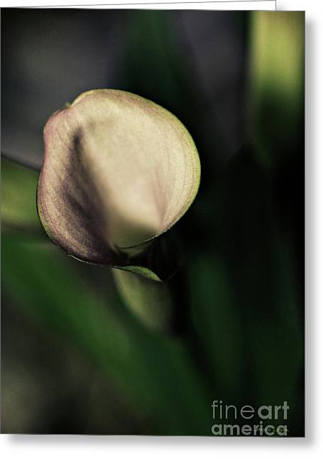 Artography Greeting Cards - Calla Lily Floral Greeting Card by Jayne Logan Intveld
