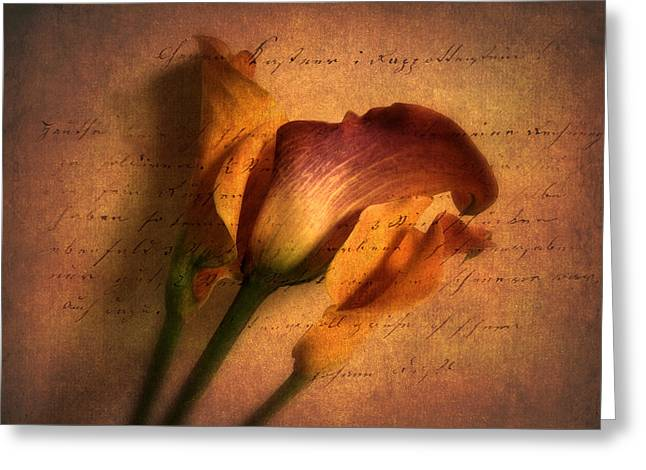 Calla Lily Digital Greeting Cards - Callas by Candlelight Greeting Card by Jessica Jenney