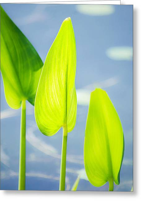 Florida Pond Greeting Cards - Calm Greens Greeting Card by Parker Cunningham