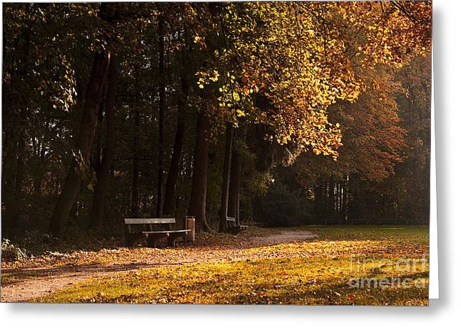 Fall Grass Greeting Cards - Calm Greeting Card by Sick Michael