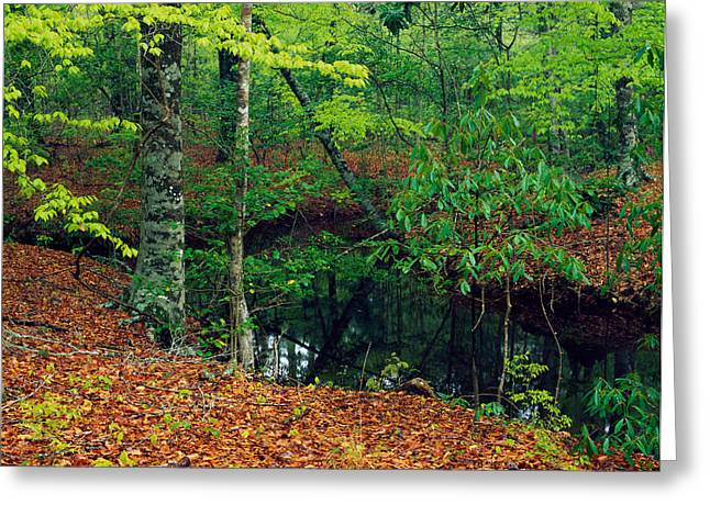 Transitions Greeting Cards - Calm Stream Through Beech And Magnolia Greeting Card by Panoramic Images