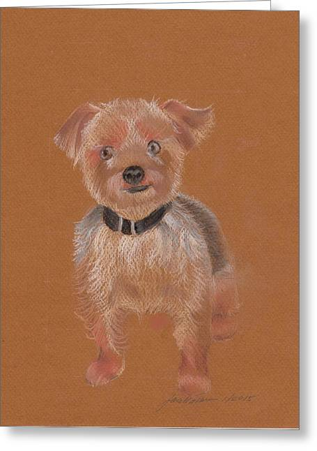 Toy Dog Greeting Cards - Calvin Greeting Card by Joan Mansson