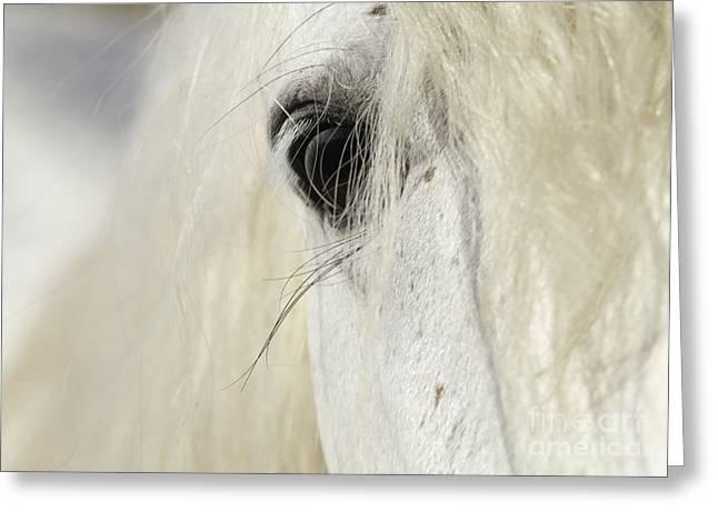 Wild Horses Greeting Cards - Camargue Stallions Eye Greeting Card by Carol Walker