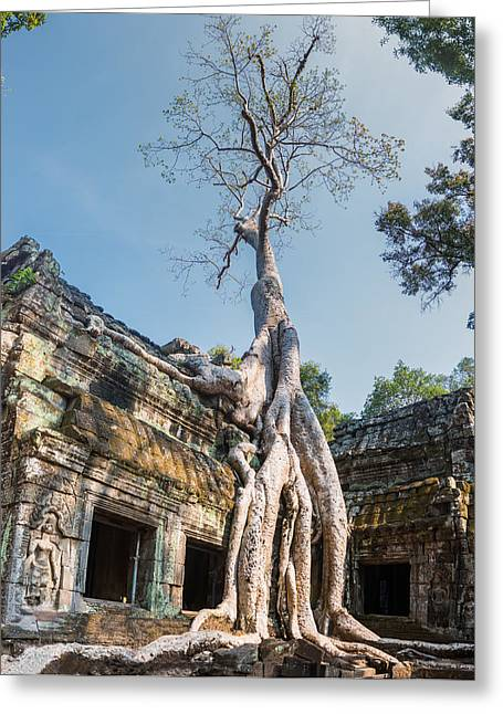 Cambodia Angkor Wat Tree Roots Greeting Card by Cory Dewald