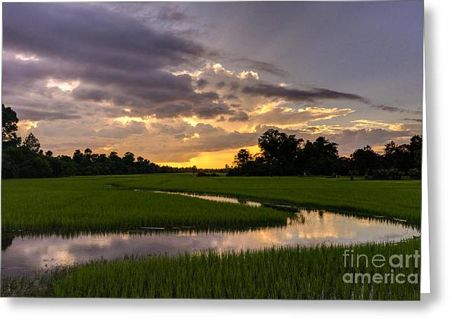 Cambodia Rice Fields Sunset Greeting Card by Mike Reid