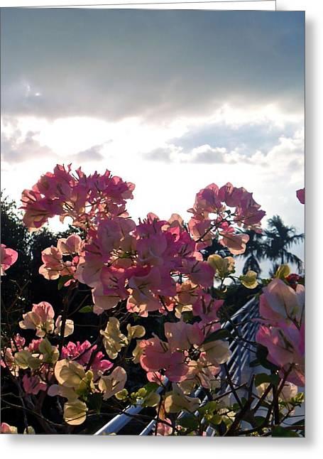 Sun Breaking Through Clouds Greeting Cards - Cambodian Coastal Flowers Greeting Card by Megan Czerwinski