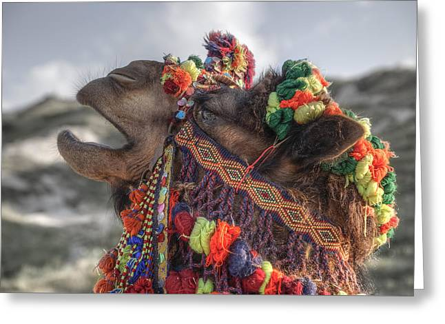 Camels Photographs Greeting Cards - Camel Greeting Card by Joana Kruse