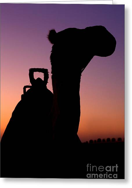 Dromedary Greeting Cards - Camel silhouette in Dubai Greeting Card by Fototrav Print