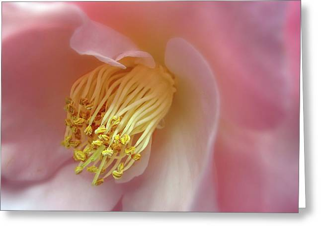 Stamen Greeting Cards - Camellia  Greeting Card by Jessica Jenney