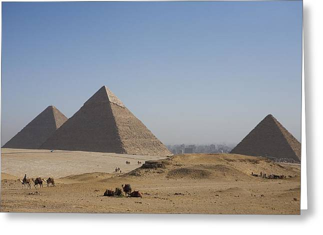Camels At The Great Pyramids At Giza Greeting Card by Taylor S. Kennedy