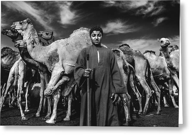 Egyptian Photographs Greeting Cards - Camels Gaurdian Greeting Card by Mohamed Safwat Abonour